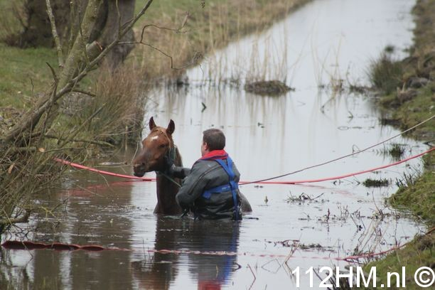 Paard te water BAT (4)