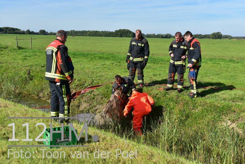 Paard te water Ommedijkseweg Leiden (1)