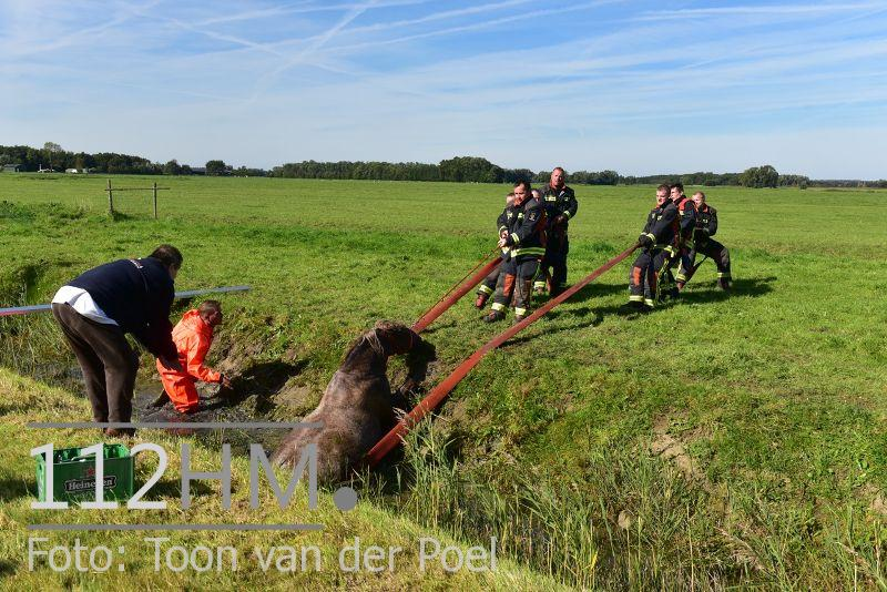 Paard te water Ommedijkseweg Leiden (4)