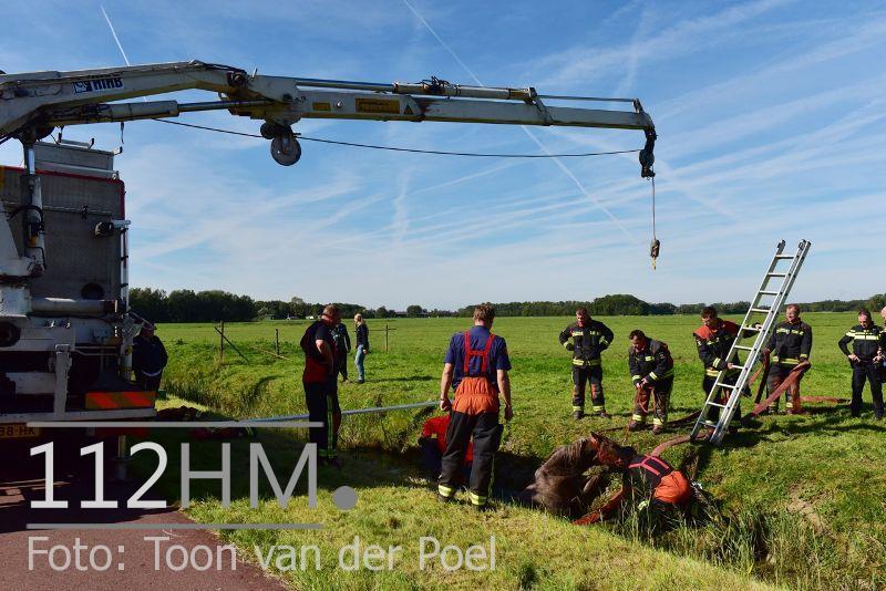 Paard te water Ommedijkseweg Leiden (5)