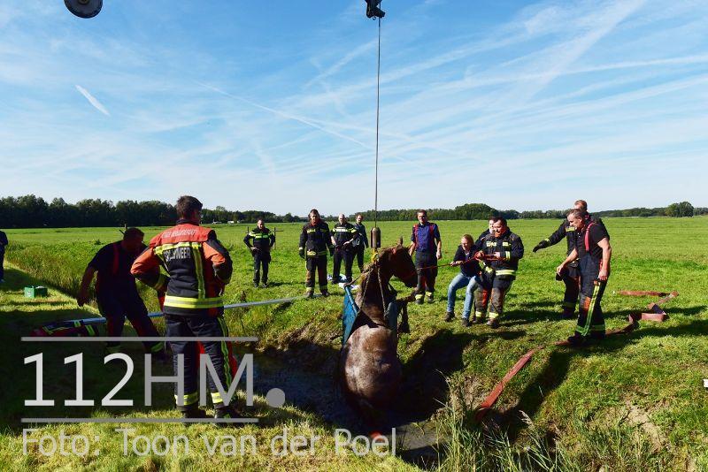 Paard te water Ommedijkseweg Leiden (6)