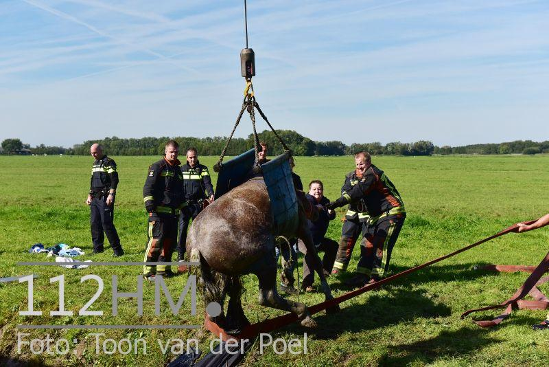Paard te water Ommedijkseweg Leiden (7)