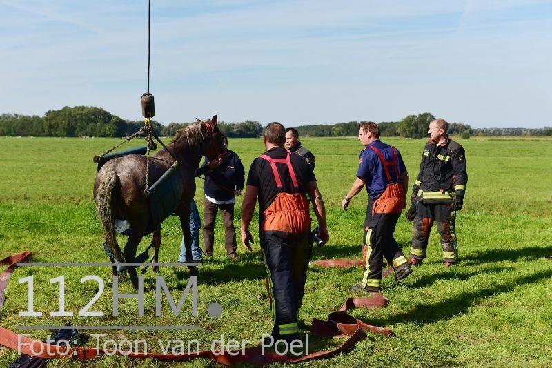 Paard te water Ommedijkseweg Leiden (8)