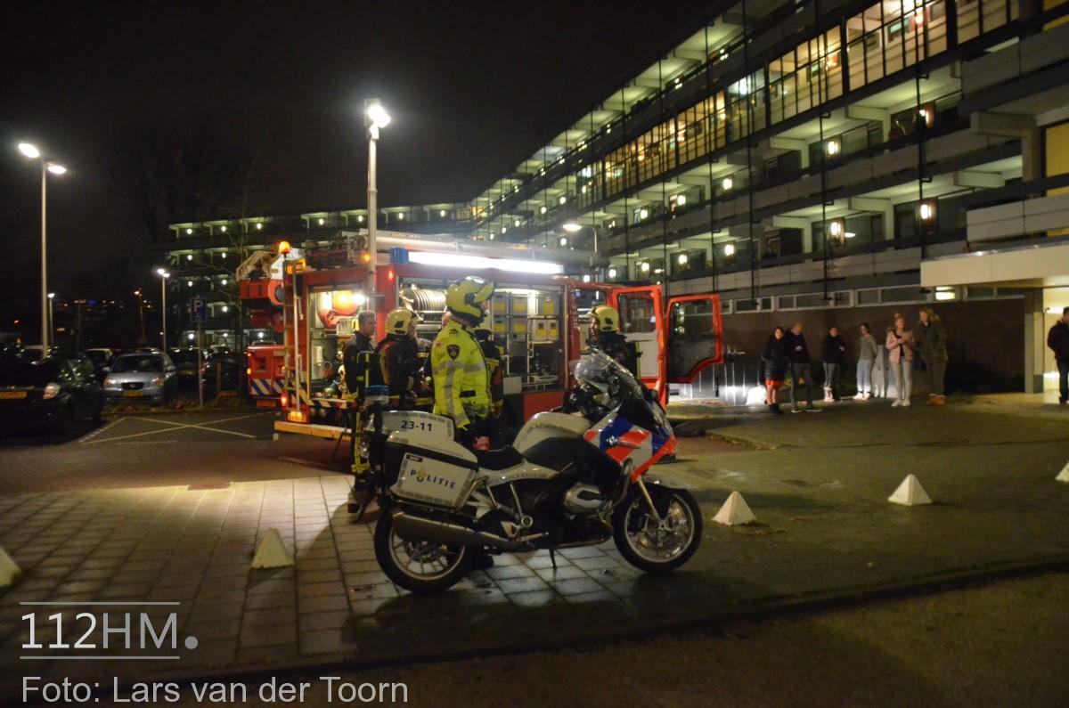 rookbom wilde wingerdlaan gda ^LT (10) [#112hm.nl]