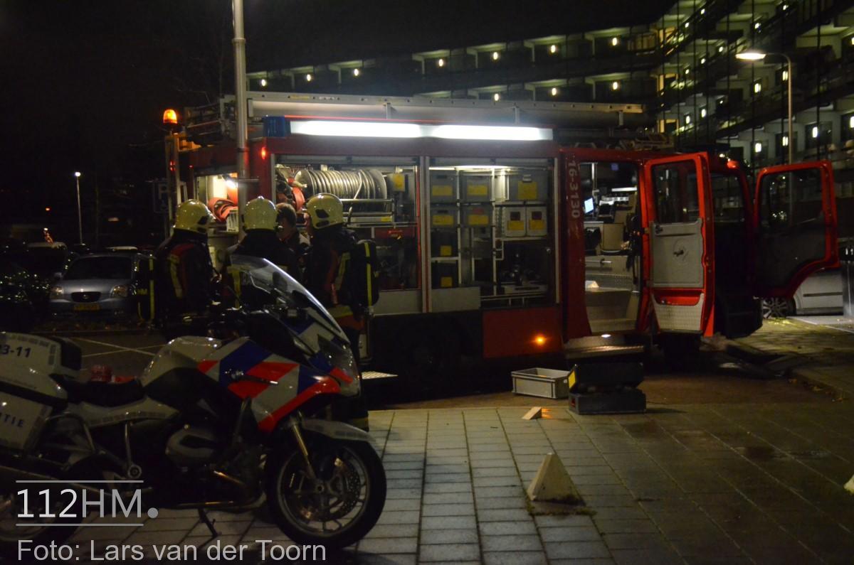 rookbom wilde wingerdlaan gda ^LT (11) [#112hm.nl]
