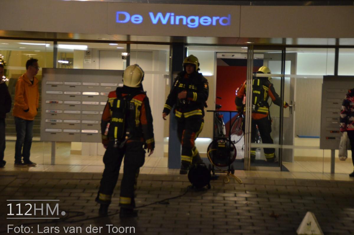 rookbom wilde wingerdlaan gda ^LT (3) [#112hm.nl]