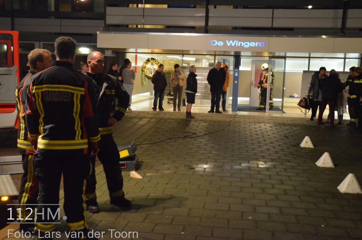 rookbom wilde wingerdlaan gda ^LT (8) [#112hm.nl]